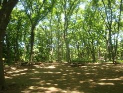 東高根森林02.jpg