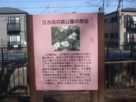 江古田公園003.jpg