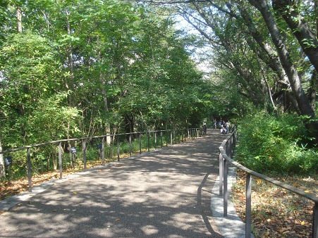 赤羽自然観察公園002.jpg