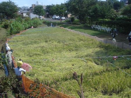 赤羽自然観察公園007.jpg