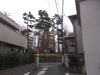 みやのくぼの森緑地001.jpg