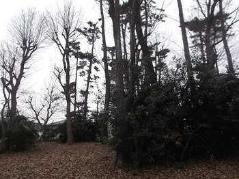 みやのくぼの森緑地003.jpg