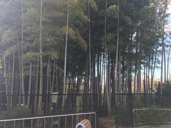中の宮竹林憩いの森002.jpg