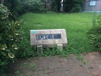 北町こぶし緑地001.jpg