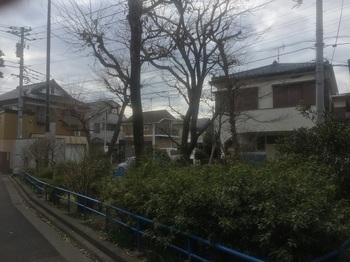 土支田緑地001.jpg