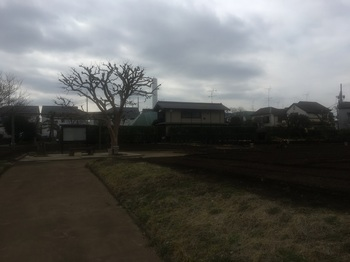 土支田農業公園005.jpg