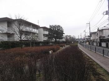 大泉六丁目緑地003.jpg