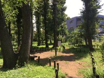 大関山の森緑地004.jpg