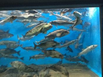 室蘭水族館005.jpg