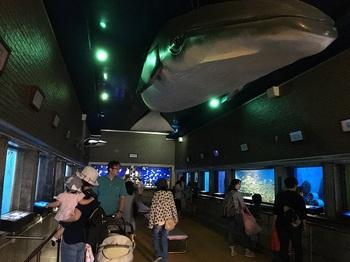 室蘭水族館007.jpg