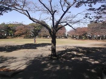 府中公園003.jpg