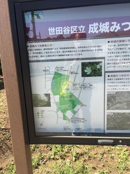 成城みつ池緑地003.jpg