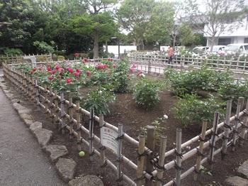 新堀しゃくやく公園010.jpg