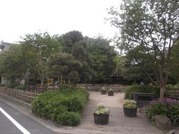 新堀しゃくやく公園011.jpg