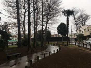 早宮の森緑地002.jpg