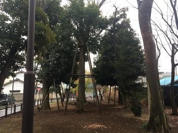 早宮の森緑地003.jpg