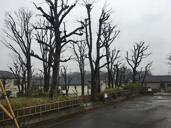 早渕の森緑地001.jpg