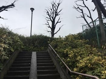 早渕の森緑地004.jpg
