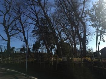 春日憩いの森001.jpg