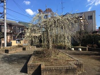 春日町さつき緑地002.jpg