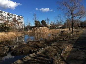 桑袋ビオトーブ公園003.jpg