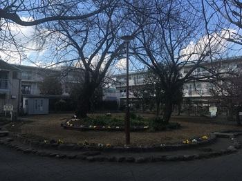 桜樹広場001.jpg