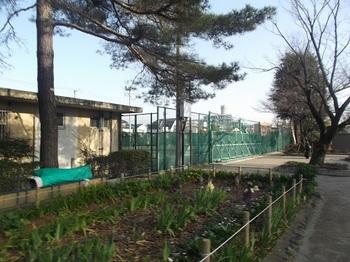 渋江公園002.jpg