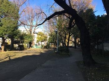玉川上水旧水路緑道(大山町地区)003.jpg