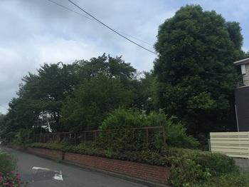 田柄中央児童遊園001.jpg