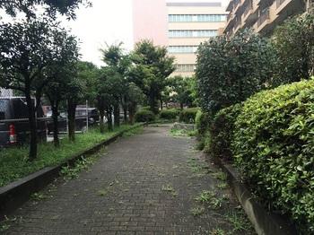 砧五丁目ひだまり公園002.jpg