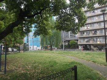 篠崎公園34号地004.jpg