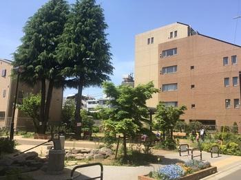 若林もみじ公園001.jpg