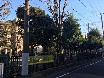 藤崎けやき公園001.jpg