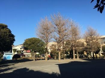 藤崎第二公園002.jpg