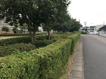裏山南公園008.jpg