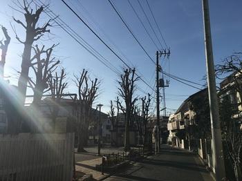 赤堤けやき公園001.jpg
