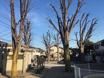 赤堤けやき公園006.jpg