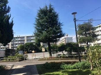 辰沼町アパート001.jpg