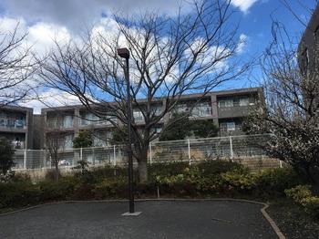 高松二丁目さくら緑地002.jpg