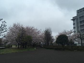 NHK放送技術研究所庭園001.jpg