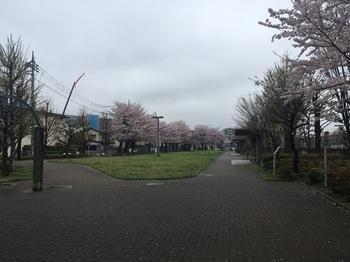 NHK放送技術研究所庭園002.jpg