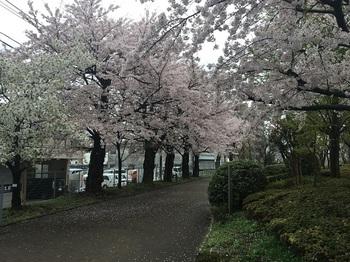 NHK放送技術研究所庭園003.jpg
