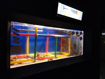 二見水族館06.jpg