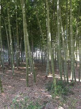おくらやまの森緑地004.jpg