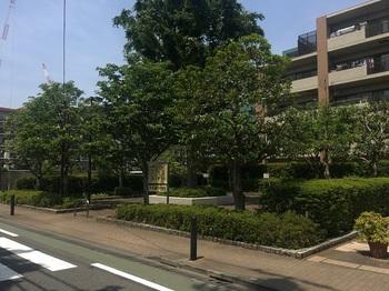 三ツ塚けやき緑地001.jpg