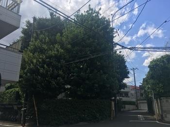 中銀桜丘マンション001.jpg