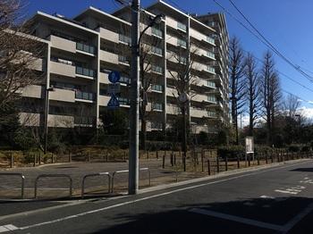 南田中いちょう並木公園001.jpg