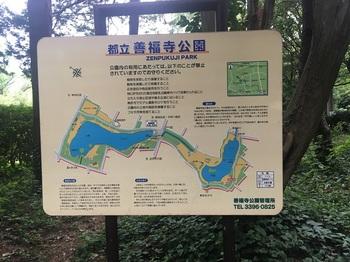 善福寺公園001.jpg