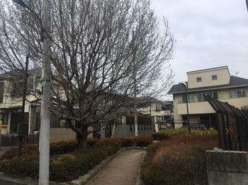 土支田一丁目緑地002.jpg