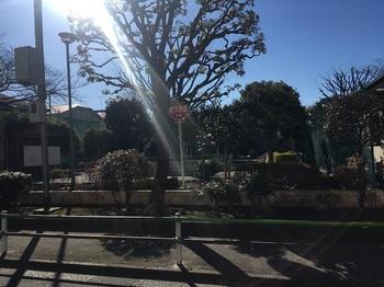 小菅めぐみ公園001.jpg